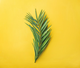 Green palm branch over bright yellow background, top view. Summer vacation or travel concept