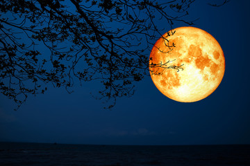 full blood moon silhouette dry tree over sea