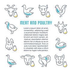 Website Banner and Landing Page of Meat and Poultry.