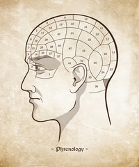 Phrenology retro pseudoscience poster or print design over grunge paper background hand drawn vector illustration.