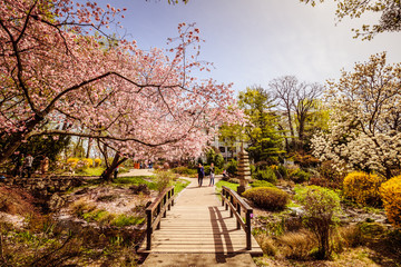 Der Frühlig im Setagaya Park, Wien, Österreich