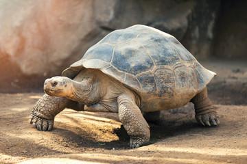 Autocollant pour porte Tortue Galapagos tortoise