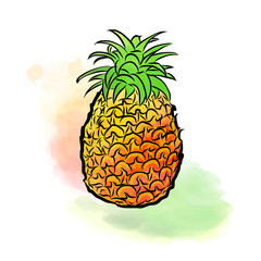 Colored drawing of pineapple