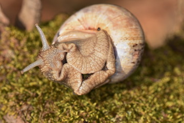 Snail in  forest,Close up of a snail