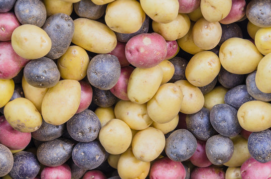 Close-up full frame view pile of organic mixed medley potatoes at farmer market. Assorted raw rainbow, tricolor mini potatoes background