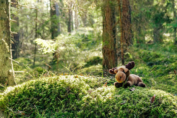 A stuffed moose in a green cozy forest.