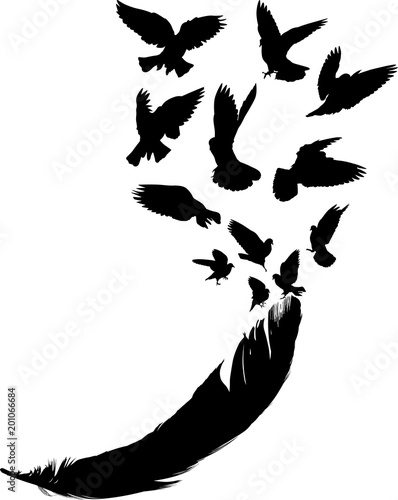 dove flying from long feather silhouette on white