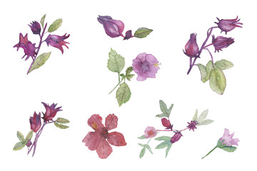 Watercolor carcade flowers illustration