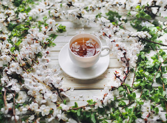 White cup of green tea and spring apricot blossom on a old wooden background. A jet of tea pours into the cup. Rustic.