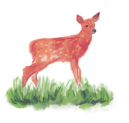 White-tailed deer fawn watercolor
