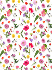 Fototapete - pattern from plants, wild flowers and  berries, isolated on white background, flat lay, top view. The concept of summer, spring, Mother's Day, March 8.
