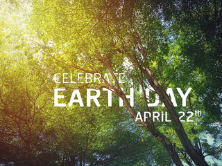 The celebrate earth day flat card or background with the tree see the branches and leaves