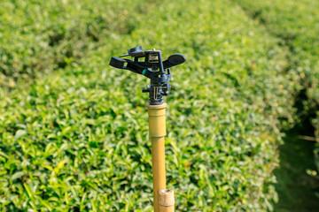 Sprinkler in tea plantation close-up