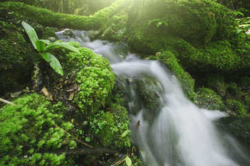 forest stream, small waterfall and green moss in natural background