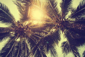 Fototapete - Coconut palm trees, beautiful tropical background, vintage filter