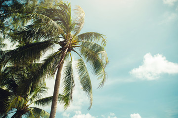 Wall Mural - Coconut palm trees, beautiful tropical background, vintage filter