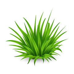 Fototapeta Thick bunch of green grass isolated on white background obraz
