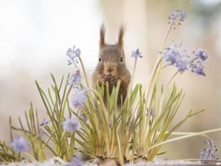 red squirrel in the middle of flowers and sunlight