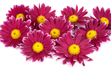 beautiful purple pink flower isolated on white