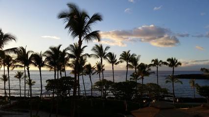 Palm Trees on the Beach