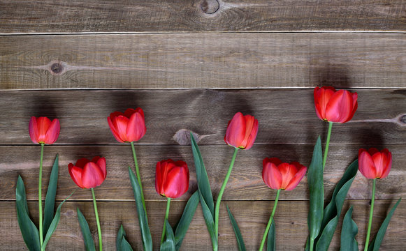 Red fresh tulips on a wooden table. Spring and celebration concept background.