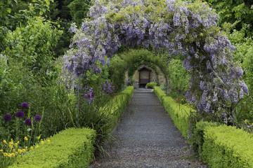 Printed kitchen splashbacks Garden Wisteria flowers arch in the garden