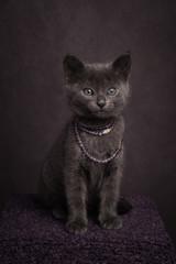 Posh kitty