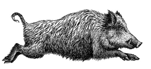 black and white engrave isolated pig illustration Fotoväggar