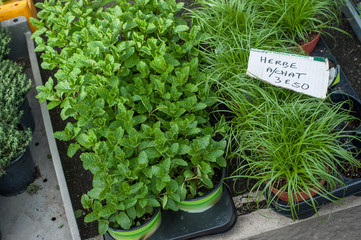 closeup of aromatic herbs at the market