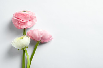 Beautiful ranunculus flowers on white background