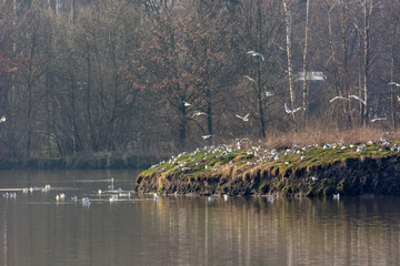 Island in a lake with nesting racks.