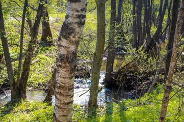 Forest river Gorodyanka, Maloyaroslavetskiy district, Kaluzhskaya region, Russia