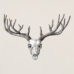 Hand drawn deer antler isolated