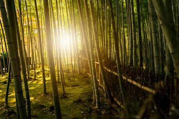 The Arashiyama Bamboo grove, Bamboo garden japanese style, Kyoto, JAPAN.