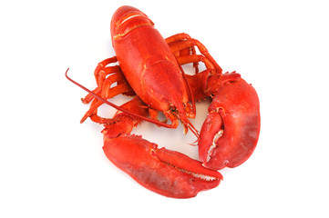 single cooked red lobster isolated on white background