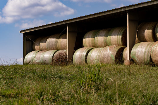Round hay bales stored in a shed