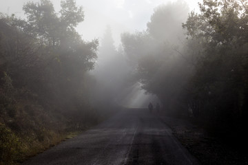 Some people walking on a road in a middle of fog with trees at the sides and sunrays