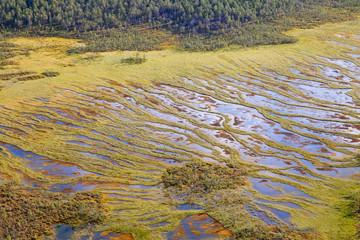 swamp, top view