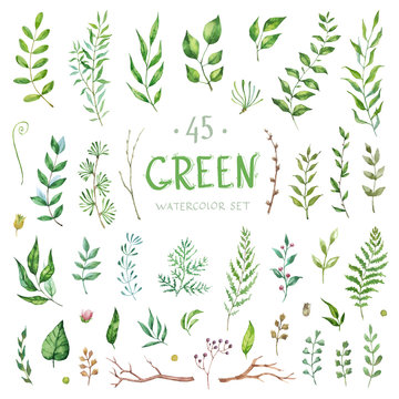 Vector Big Set watercolor elements - herbs and leaf. Collection garden, wild foliage, flowers and branches. Illustration isolated on white background. Green.