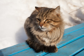 A stray cat on the street in winter