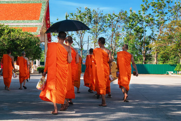 Group of Buddhist monks in orange clothes with a black umbrella. Back view.