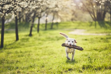Dog is in spring nature