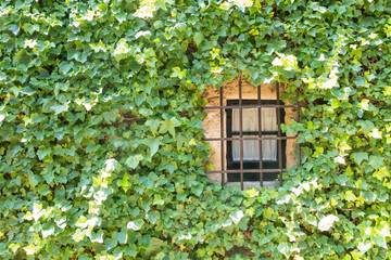 Old window with ivy of the medieval town of Peratallada in Gerona, Spain.