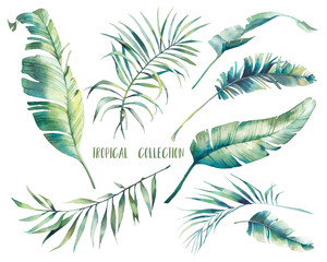 Watercolor tropical leaves: rubber plant, banana, palm tree. Botanical illustration of exotic flora. Isolated objects on white background