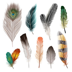 Bird Feathers Set
