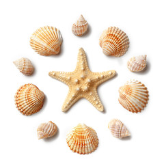 Pattern of seashells and starfish isolated on a white background.