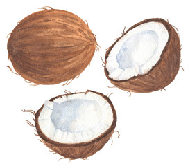 Hand drawn watercolor coconut, ripe sliced half, food art isolated on white background