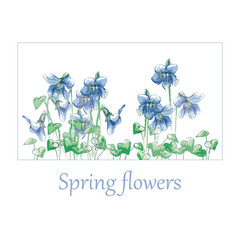 Forest Viola. Small blue violets. Delicate spring flowers. Painted flowers.