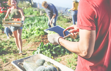 Friendly team harvesting fresh organic vegetables from the community greenhouse garden and planning harvest season on a digital tablet
