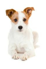 Liegender Mischlingshund isoliert auf weißem Hintergrund